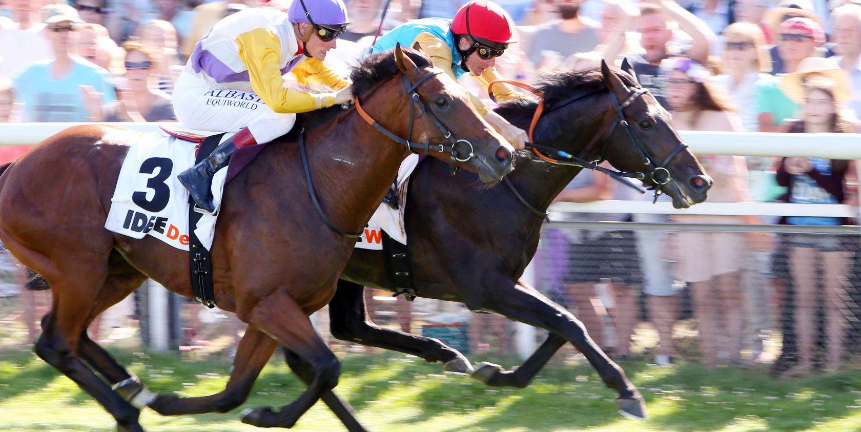 16 Pferde im IDEE 150. Deutschen Derby