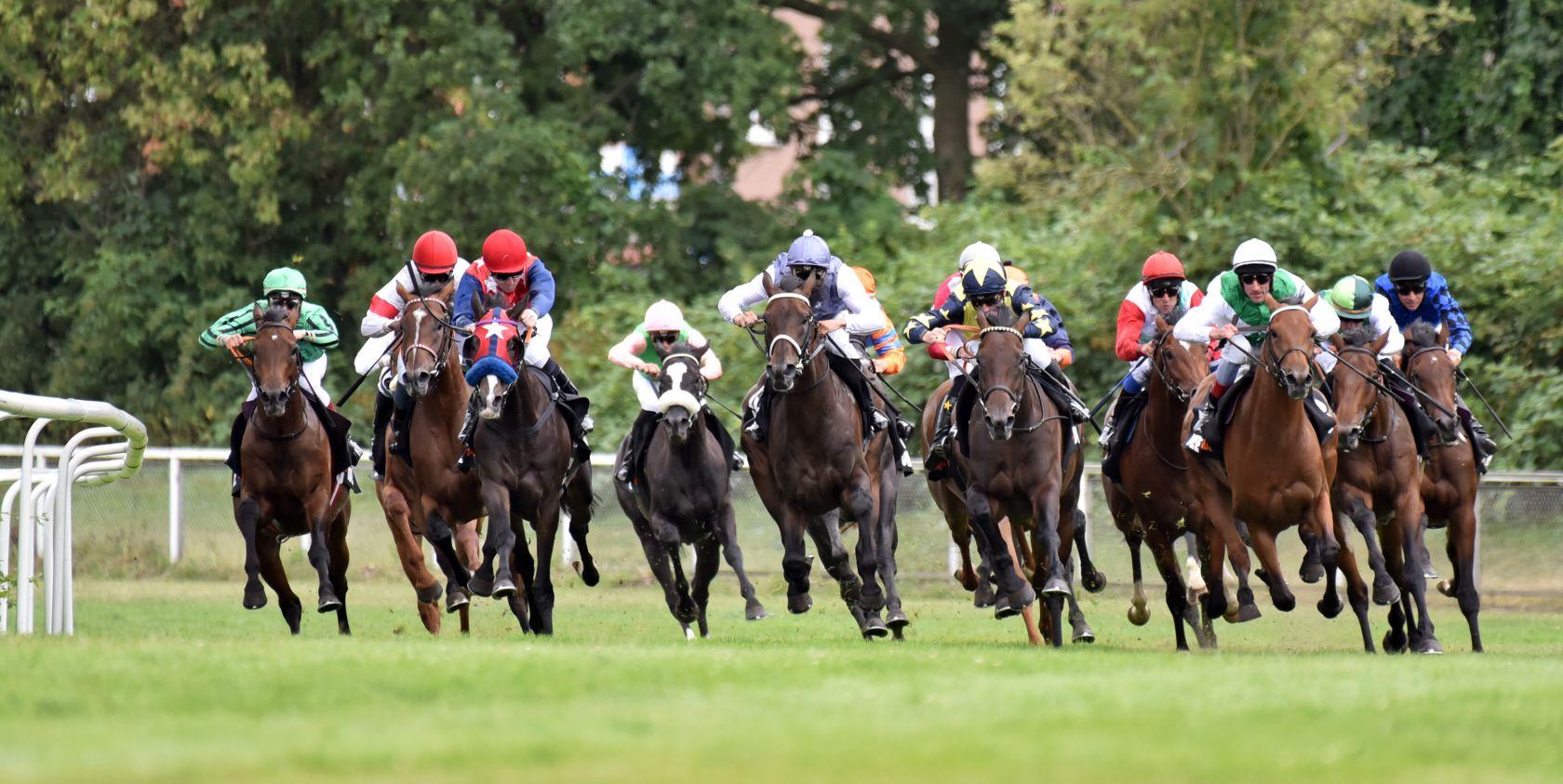151. Deutsches Derby - 110 Pferde auf der Meldeliste