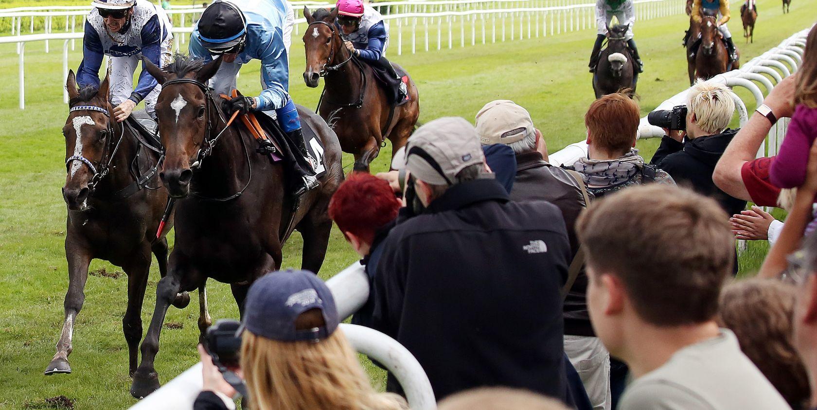 Pferderennen hautnah - Tickets