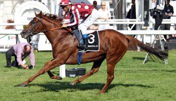 Die nächste Krönung für French King Französischer Top-Hengst auch im pferdewetten.de – Großer Hansa-Preis top